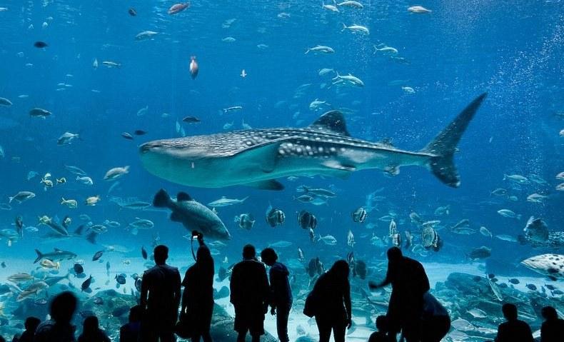 Aquarium Induction